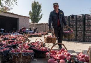 新疆生鲜农产品上行持续加速 ()