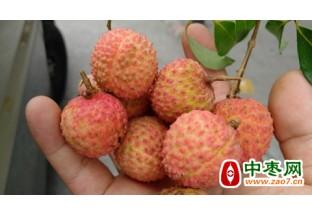 四川合江县:预计晚熟荔枝…