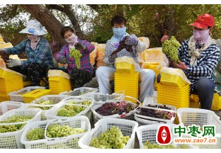吐鲁番葡萄陆续成熟上市