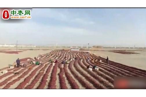 新疆红枣收货时节 ()