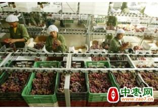 秘鲁葡萄:上半年出口增长…