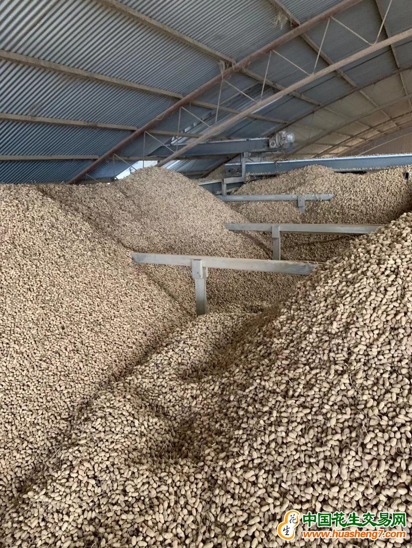 大量供應白沙羅漢通貨,精選果,麻皮果 ()