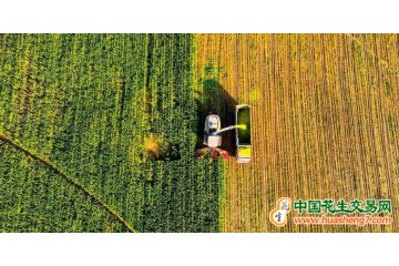 全球粮食价格大幅度上涨