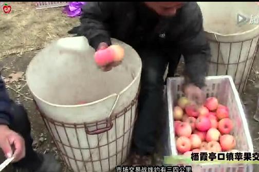 """今年的苹果弱到""""爆""""--栖霞亭口镇苹果交易实录 ()"""