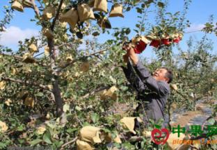 农业农村经济稳中向好发展 ()
