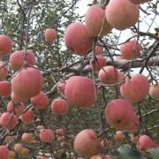 深山果农种植养殖专业合作社,组织收购代办 ()