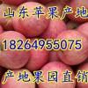18264955075山东日照红富士苹果价格便宜