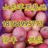18764995773山东红富士苹果价格便宜了