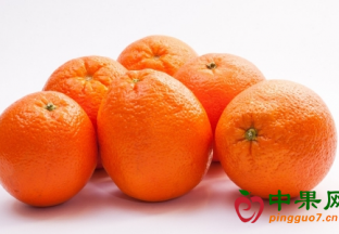 国产脐橙喜获丰收