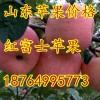 18764995773山东冷库红富士苹果价格便宜