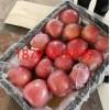 陕西冷库红富士苹果产地价格