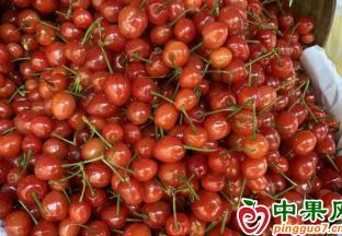 贵阳:樱桃少量上市  价格较亲民 ()