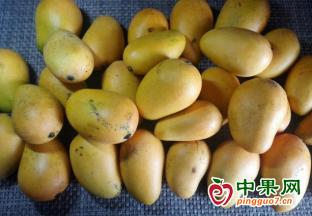 芒果供应充足  市场竞争激烈 ()