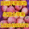 18264955075日照冷库苹果大量出库价格便宜