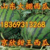 18369313268山东日照大棚甜王西瓜上市