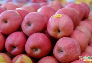 蘋果交易遇冷 銷售壓力明顯