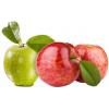 求购苹果品种不限