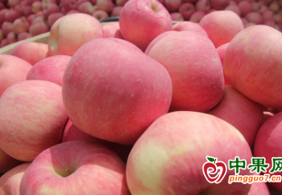 時令水果大量供應  價格季節性下降 ()