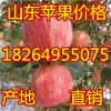 18264955075山东日照冰糖心苹果大量上市