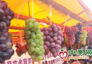 山东青岛:葡萄大量上市 价格整体下跌 ()