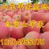 18264955075冷库苹果清库处理价格大跌