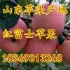 18369313268山东日照红富士苹果上市