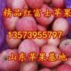13573955797山东日照水晶红富士苹果大量上市