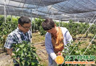创新农业 开设柑橘田间培训 ()