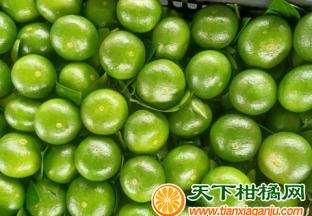 早熟柑橘发展缓慢 ()