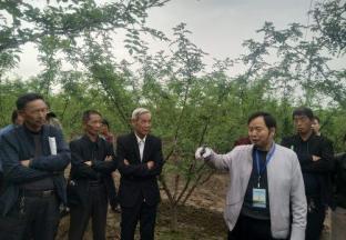 河南豫灵:专家讲解花椒栽培技术 提升椒农管护技能 ()