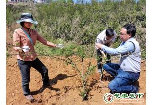 贵州省林科院花椒团队深入区县指导花椒种植 ()