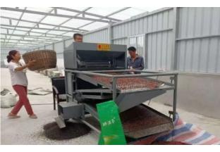 陕西凤县:花椒加工厂  打造新模式 ()