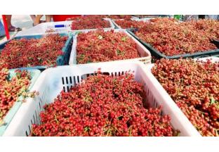 孟津:大红袍花椒成熟啦