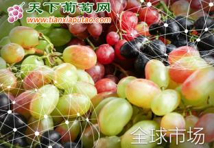 全球市场报告:葡萄 ()