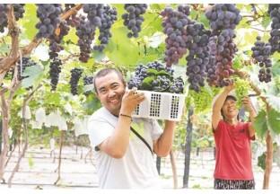 四川彭山:主打葡萄产业 助…