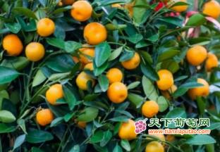 上海召开2021年柑橘进公园…