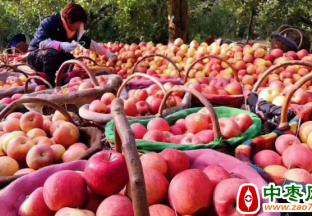 阿克苏苹果分级有了新标准