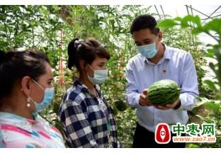 大兴西瓜在新疆和田试种成…